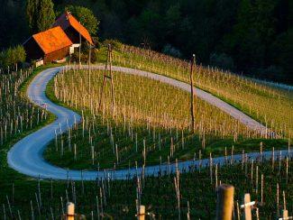 Heart in The Vineyard